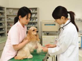 カコ動物看護学院動物看護科のイメージ