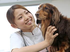 専門学校セントラルトリミングアカデミー動物美容・管理 動物看護師コース(2年次からのコース分けとなります)のイメージ