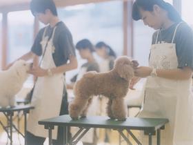 専門学校 福岡ビジョナリーアーツペット ドッググルーミングのイメージ