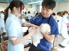 セピア動物専門学院ペットビジネス学科 動物看護科のイメージ