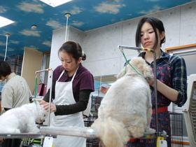 セピア動物専門学院一般向けコース(1ヶ月〜の短期コース)のイメージ