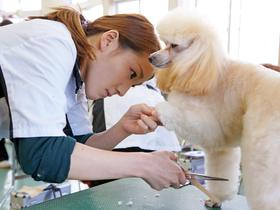 つくば国際ペット専門学校ペットビジネス学科 ドッグトリマーコースのイメージ