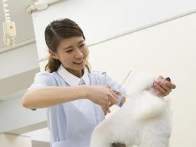 国際ペット総合専門学校トリマーのイメージ