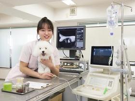 国際ペット総合専門学校動物看護師のイメージ