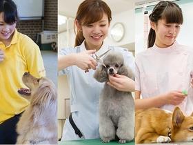 国際ペット総合専門学校ペットスペシャリストのイメージ