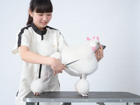 いばらき動物専門学院愛犬美容学科 研究科のイメージ