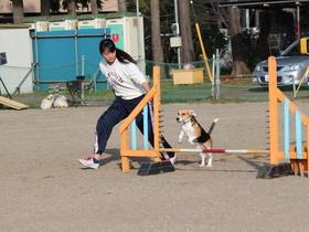 いばらき動物専門学院家庭犬訓練学科 研究科のイメージ