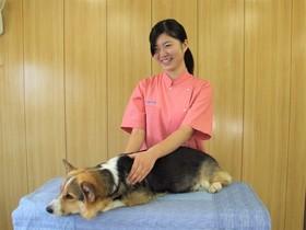関空ペット総合学院ペットビジネス科 ペットアロマ&マッサージコースのイメージ