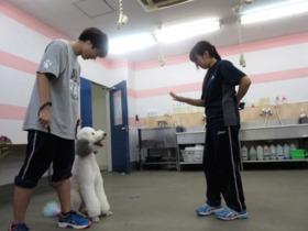 日本ペット&アニマル専門学校ペットビューティー・ケア科 ドッグトレーニング専攻のイメージ
